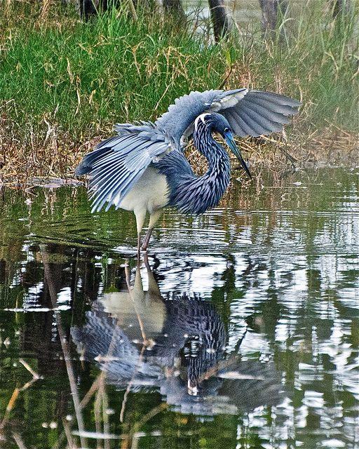 10000 Islands Marsh Trail - SW Florida
