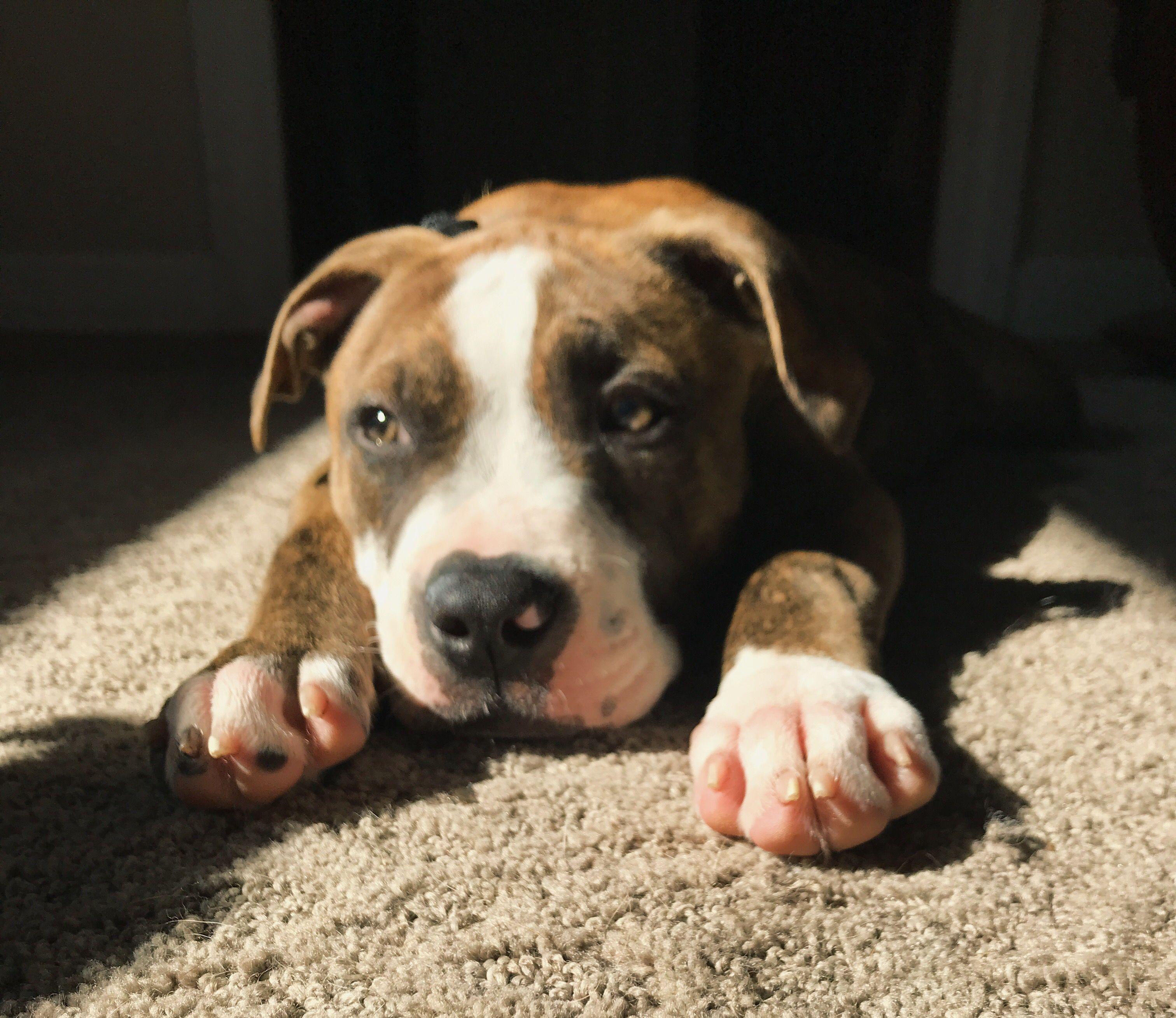 Pin by ryan elizabeth on my doggos pinterest puppies