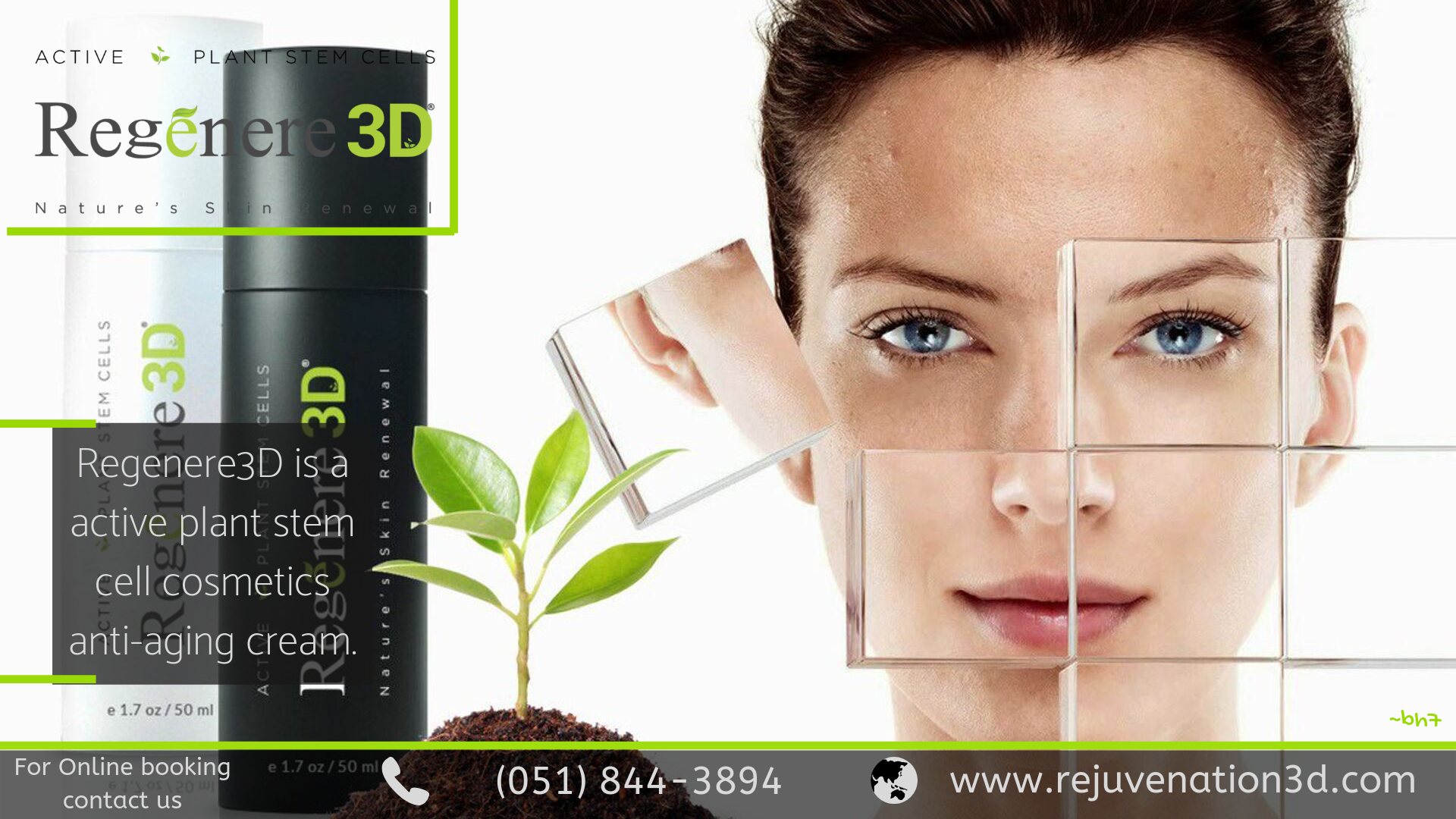 Zero Side Effects Beauty Product Plant Stem Cell Stem Cells Facial Cream