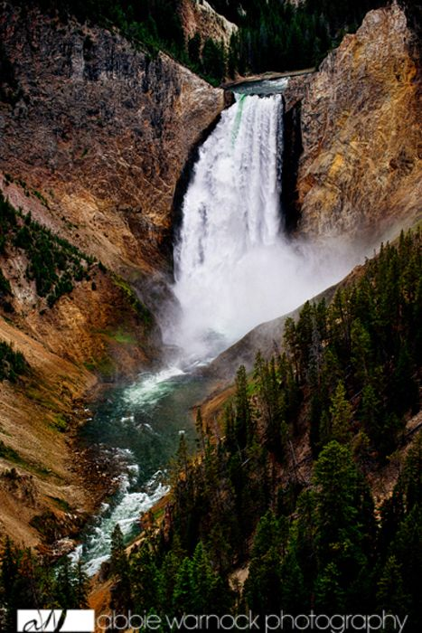 Yellowstone Falls in Yellowstone National Park.  Prints are available for purchase by clicking on the image.  Photo by Abbie Warnock