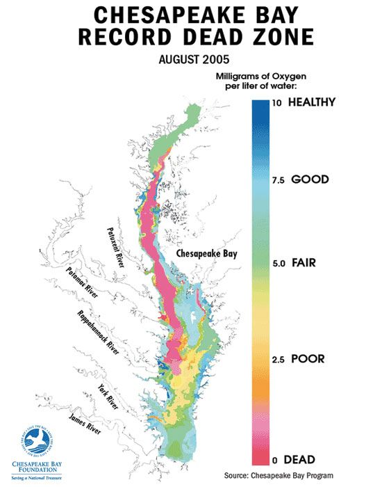 In what season will dead zones be most prevalent in the chesapeake bay — pic 2