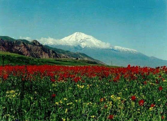 Aliza Honda Google Natural Landmarks Archipelago Flower Field