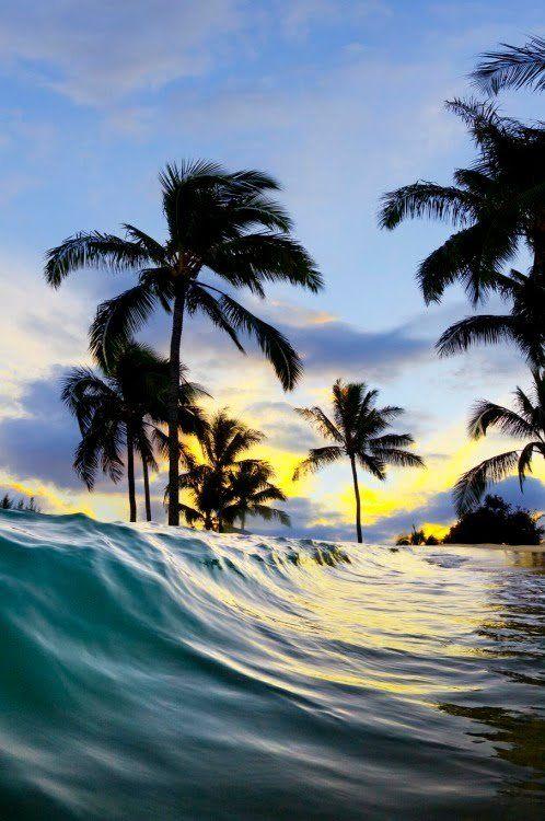 Surf and Skate — 0ce4n-g0d: Palm wavebySean Davey