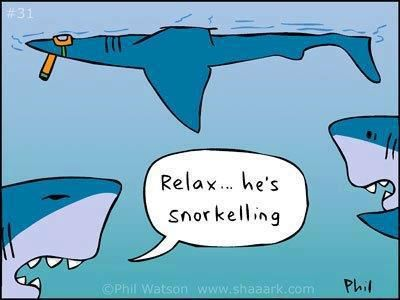 Scuba Humor Actually Laughed At This Only Me Sharks Funny Diving Quotes Scuba Diving Quotes