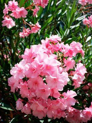 4 Plantas De Exterior Resistentes Para El Jardin Gardineria - Plantas-exterior-resistentes