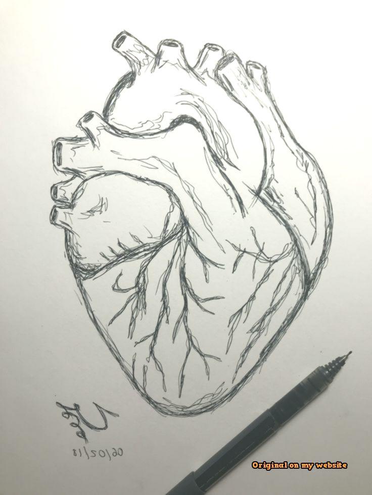 Art Drawings Tumblr - Human heart drawing #easydrawing  #artdrawingsanimals #artdrawingssimple #artdrawingssimplestepbystep #kunstzeichnungendisney #kunstzeichnungentiere