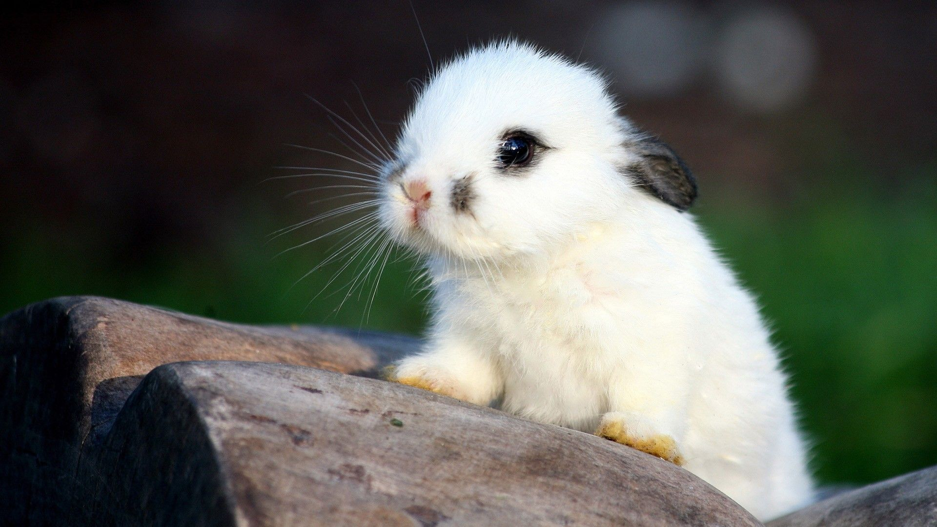 Hd Computer Animal Wallpaper Cute Rabbit Animal Hd Desktop