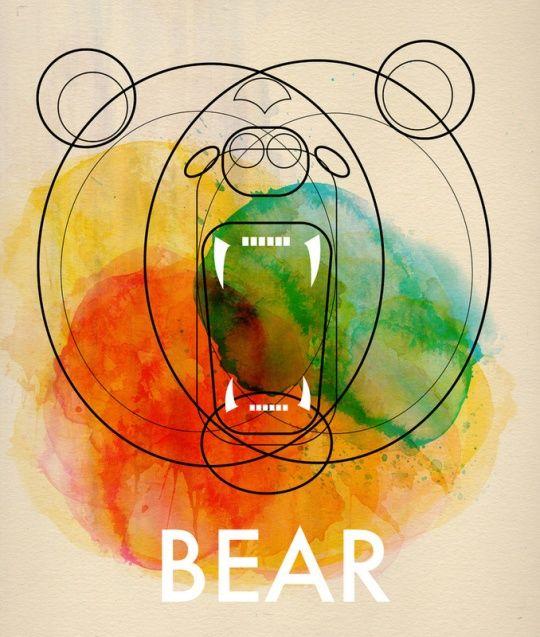 Bear by Alvaro Tapia Hidalgo