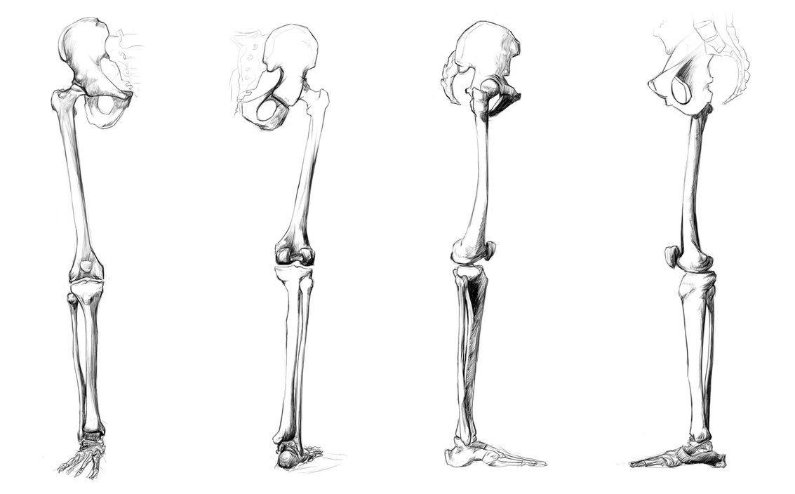 Anatomy Leg Art Pinterest Anatomy Anatomy Bones And Leg Anatomy