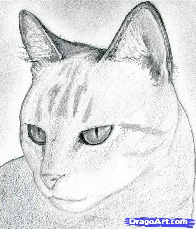 how to draw a cat head, draw a realistic cat step 8 and like OMG! get some yourself some pawtastic adorable cat apparel!