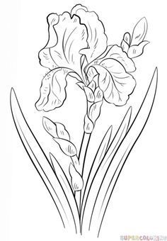 Photo of How to draw an iris flower | Step by step Drawing tutorials More