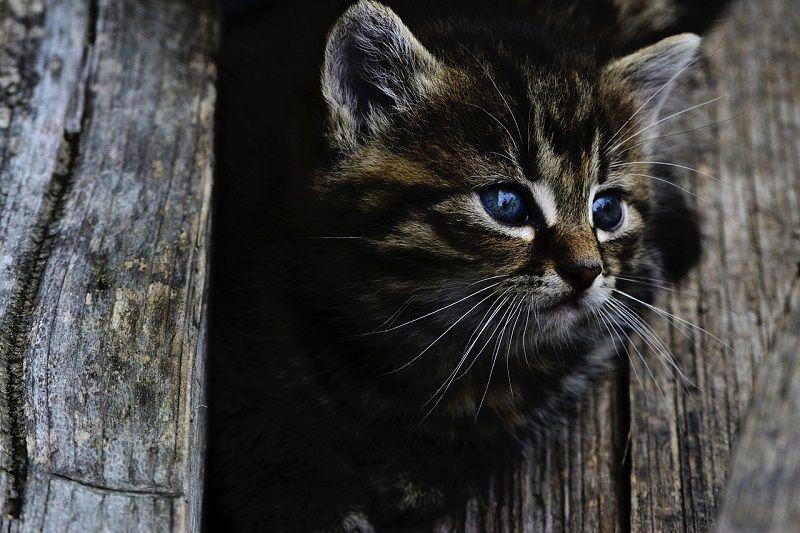 Milben bei Katzen sind ein Problem und schädlich für die Katze, denn sie verursachen Hautkrankheiten und sind auch für Menschen sehr unangenehm, da sie beim vertrauten Schmusen mit der Katze starke Hautreizungen verursachen können. - Foto: pixabay.com/ petkation/CCO
