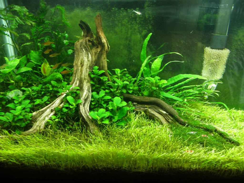 Zeldar S 10gallon Tree Stump Scape Fish Tank Aquarium