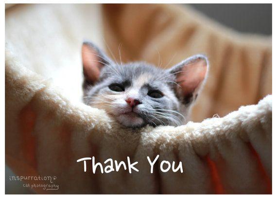 Risultati immagini per kitten thank you