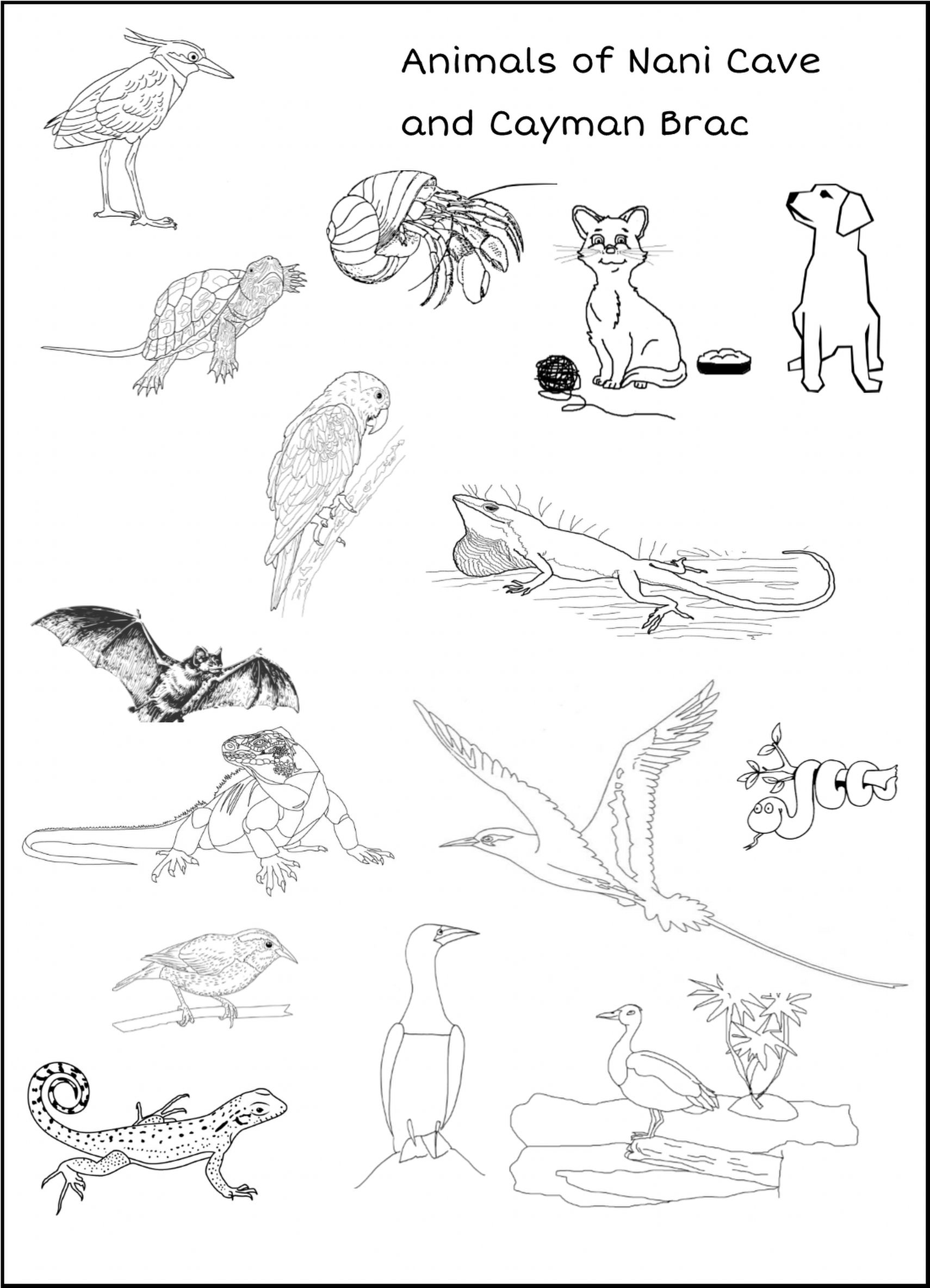 Animals Of Nani Cave This Delightful Coloring Book Is Designed With The Pre K To Kindergarteners In Mind Student Coloring Pages Animals Animal Coloring Pages