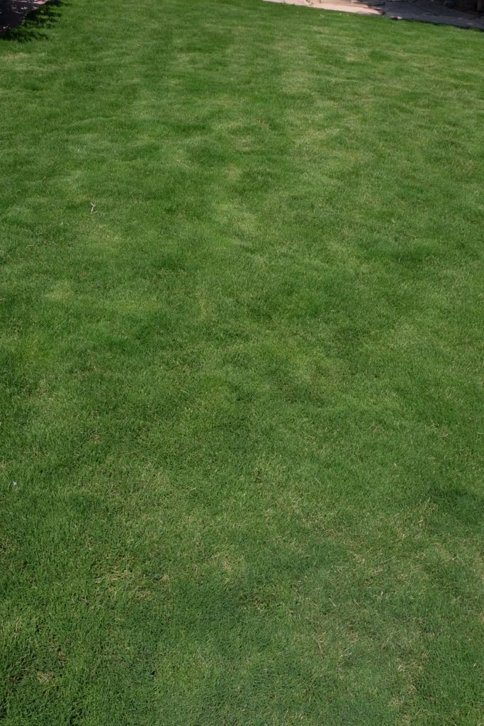 More highlights from Denver | Lawn, Outdoor decor, Outdoor