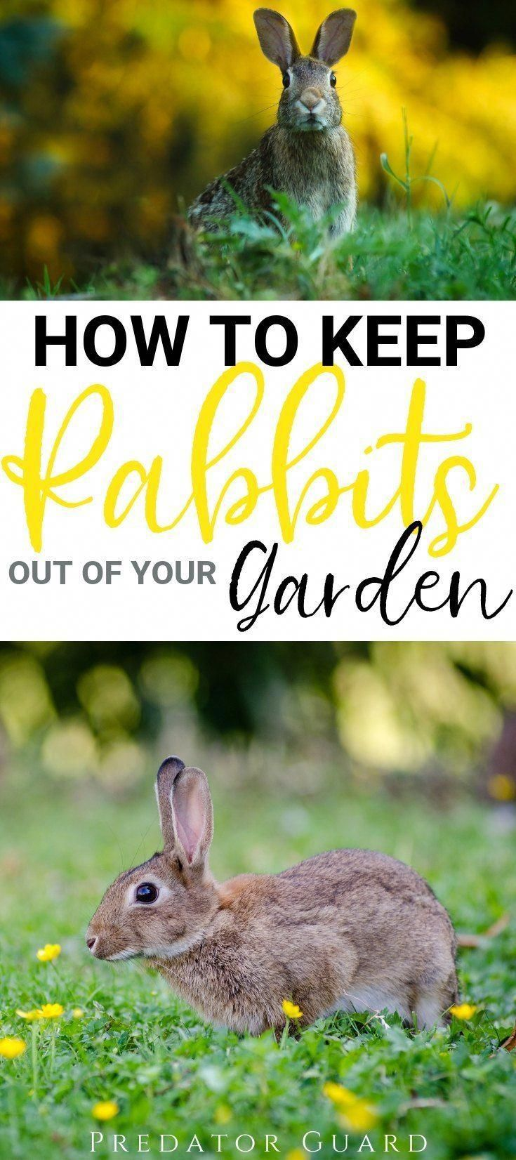 How To Keep Rabbits Out of The Garden | Predator Guard # ...