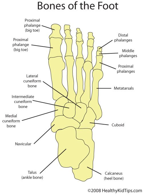 Parts Of The Foot Diagram Whole Foot Schematics Wiring Diagrams