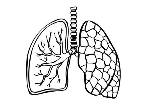 Dibujo Para Colorear Libreta: Dibujo Para Colorear Pulmones