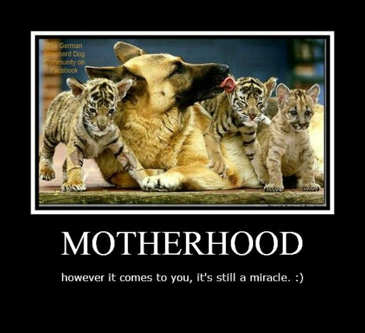 Mother r mothers n thats a fact Animals friendship, Cute