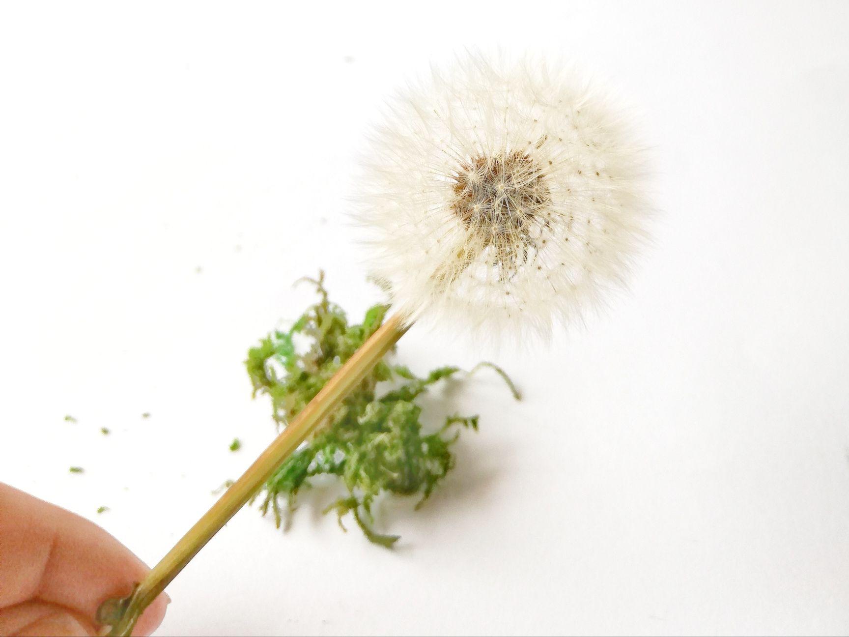 Deko-Trend: Pusteblumen haltbar machen - dorfmama.de