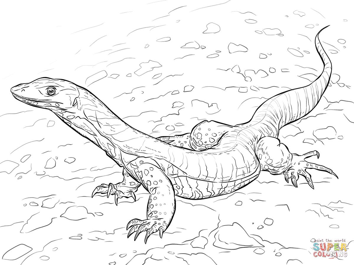 39++ Printable komodo dragon coloring pages info