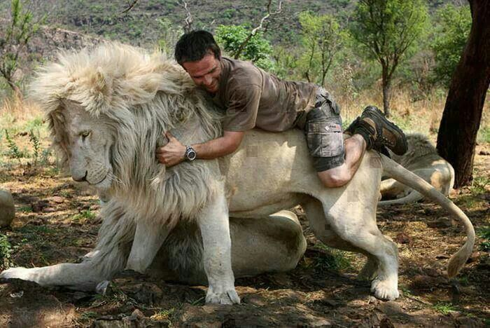 Kevin Richardson playing with a white lion