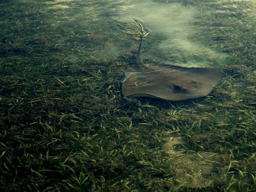 "Trade place with me sometime. Please. ""Sting Ray, Key West (National Geographic)"""