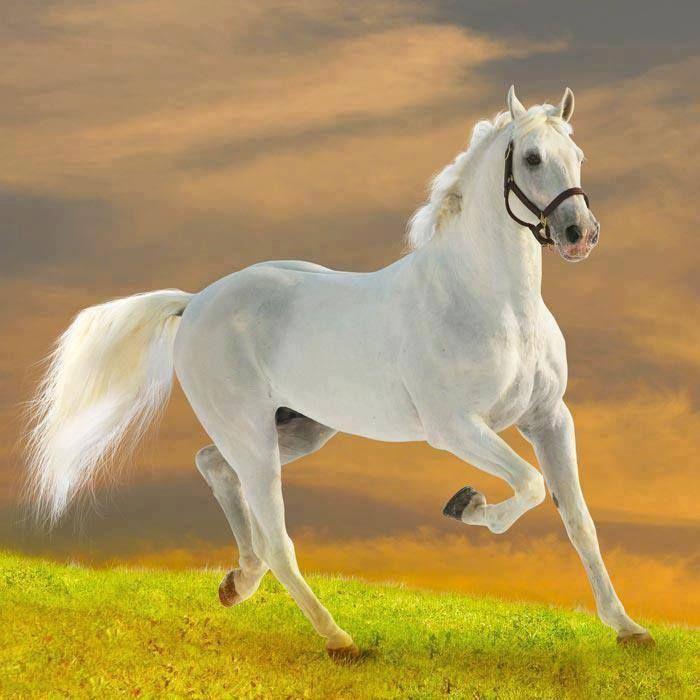 American quarter horse hd wallpapers american quarter horse american quarter horse hd wallpapers american quarter horse altavistaventures Gallery