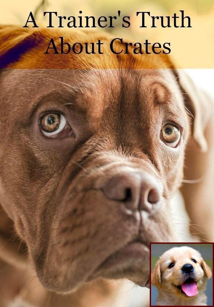 1 Have Dog Behavior Problems? Learn about Dog Behavior In