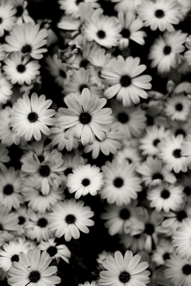 Black And White Hd Desktop Wallpapers For Achtergronden