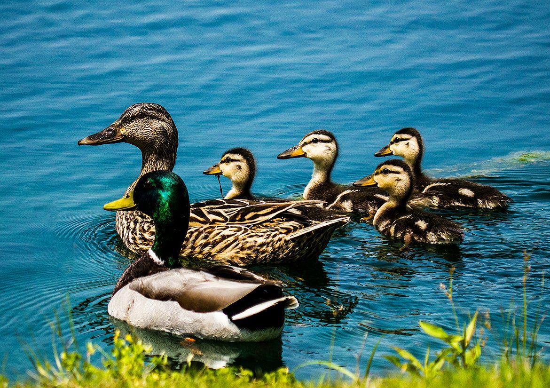 "outdoormagic: ""(via duck dynasty by Rick Head / 500px) """