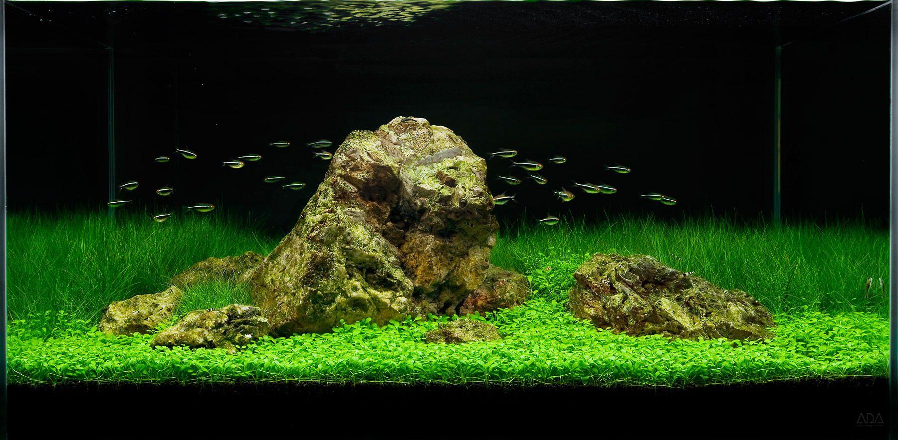 Aquascape Design aquarium design group - a tranquil aquascape in the ada 90-p