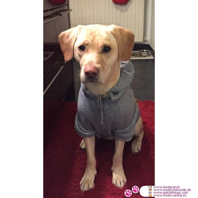 Felpa Grigia Per Cani Grossa Taglia Labrador Retrievers Grosse
