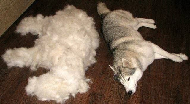 Fed Up With Excessive Summer Shedding Try Adding This Nutrient To