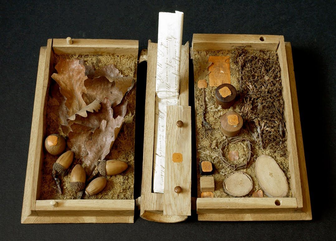 Have You Ever Heard Of A Xylothek Wooden Storage Boxes For Each