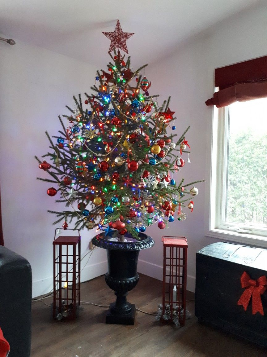 My Classic Christmas Tree My Natural Tree Is Placed In A Maple Sap Bucket Filled With White Marble Holiday Decor Christmas Cat Christmas Tree Christmas Tree