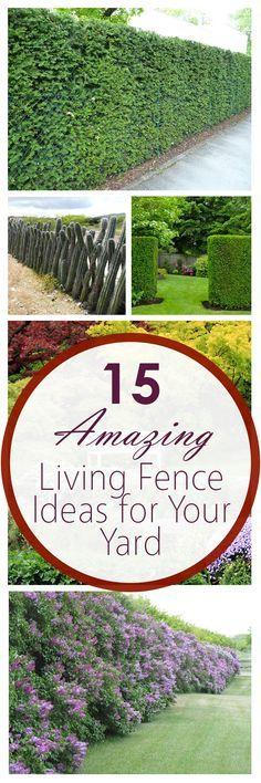 "amazing ""living fence"" ideas"