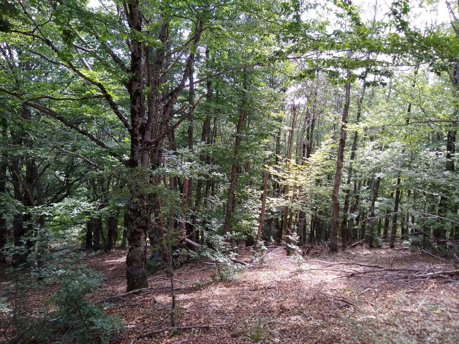 Podemos ver distintos tipos de árboles en el bosque, desde Hayas en las zonas más húmedas hasta Robles en las zonas secas y soleadas