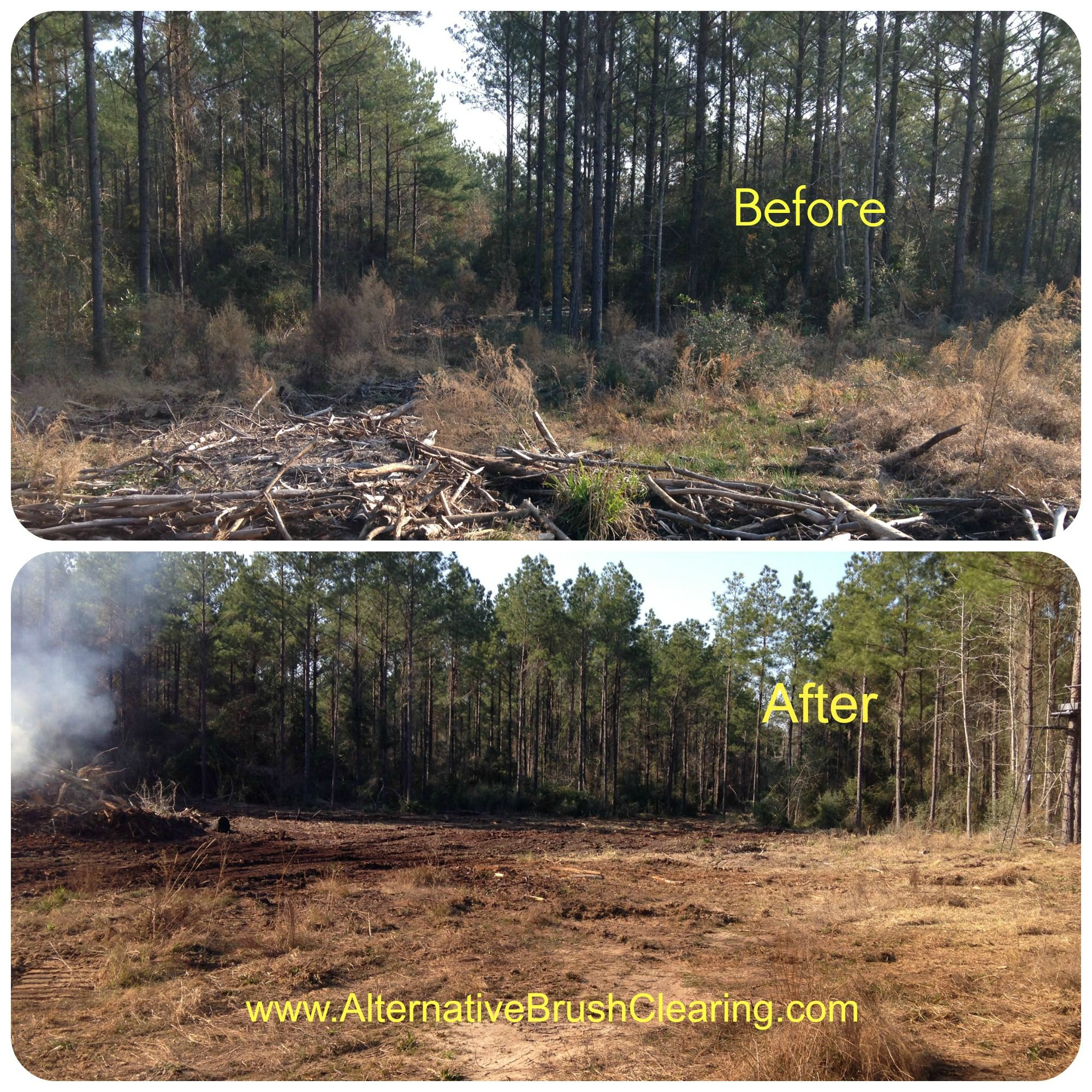 Before And After Pictures From A Recent Mulching And Dozer