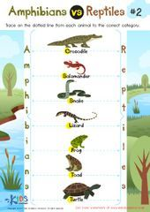 Amphibians vs Reptiles Worksheet for 3rd Grade Amphibians vs Reptiles Worksheet for 3rd Grade