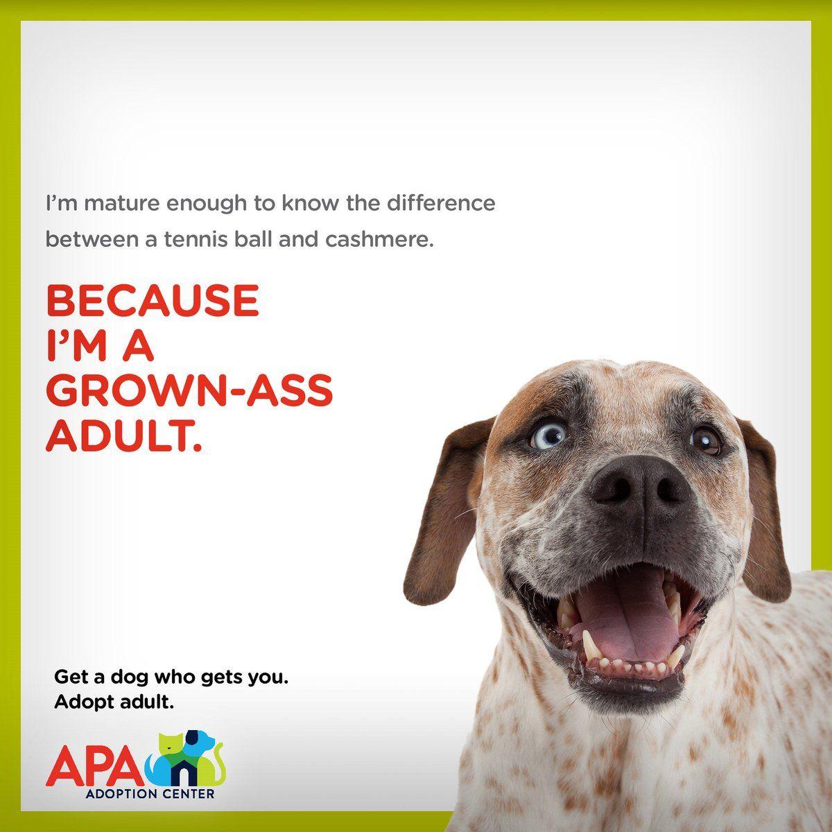 Grownassadult Hashtag On Twitter Pet Adoption Center Pet Adoption Adoption Center