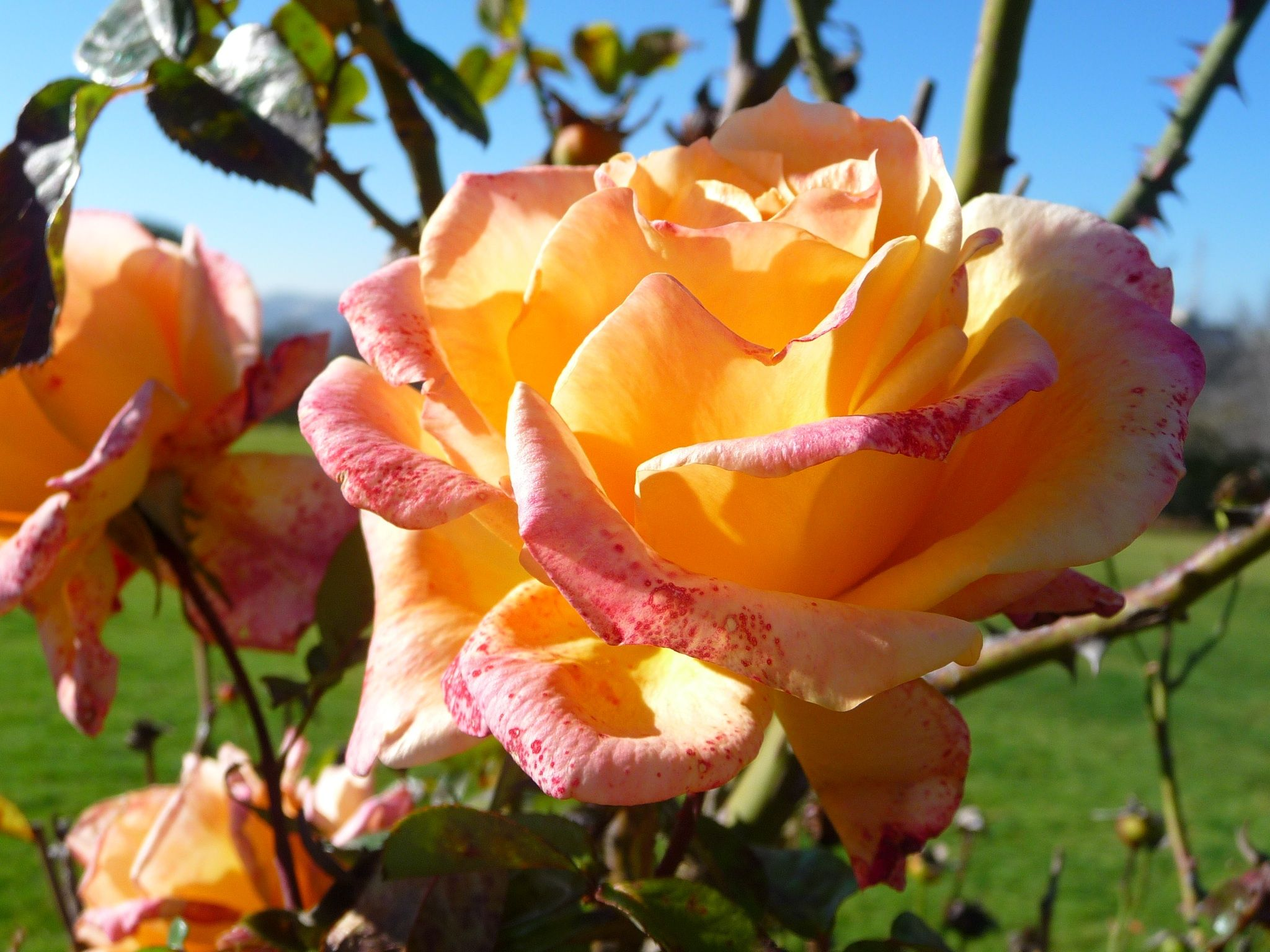Gerusalemme Si Puo Visitare Il Meraviglioso Rose Garden Uno Dei Roseti Piu Belli Al Mondo Oltreogniaspettativa Roseto Gerusalemme Rose