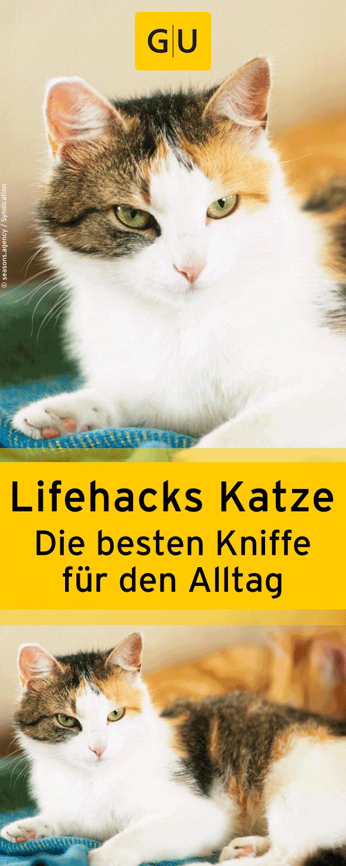 Lifehacks Katze Petra Kichmann Gu Online Shop Katzen