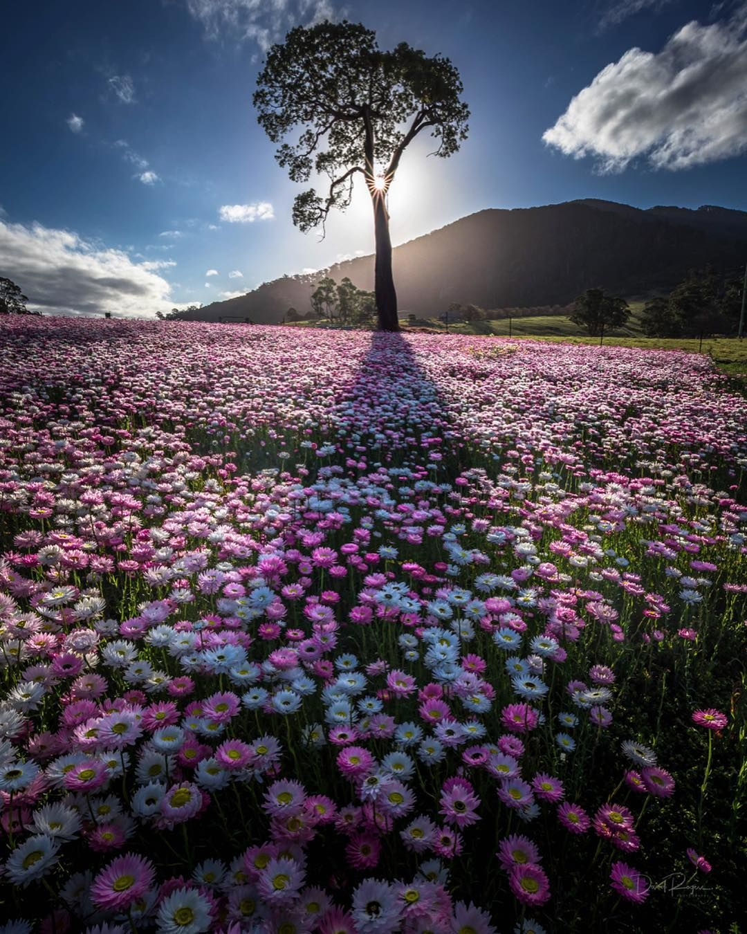 Pin By Dora Cheatham On Flowers In The Fields Beautiful Landscape Photography Landscape Photography Nature Photography