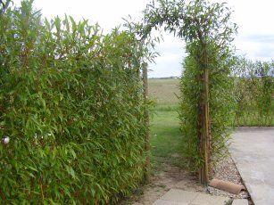 Haie en osier | Jardins et habitants | Osier, Amenagement ...
