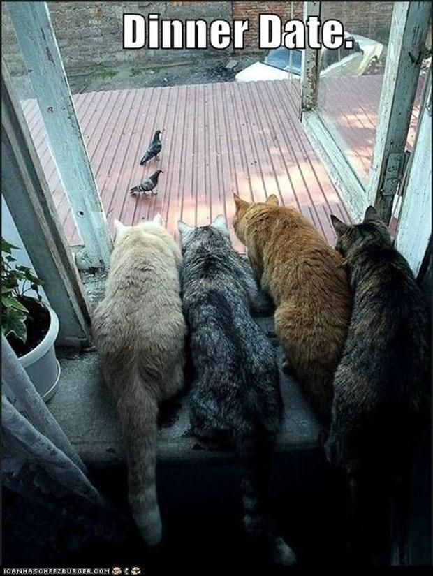 Image result for cat looking at bird