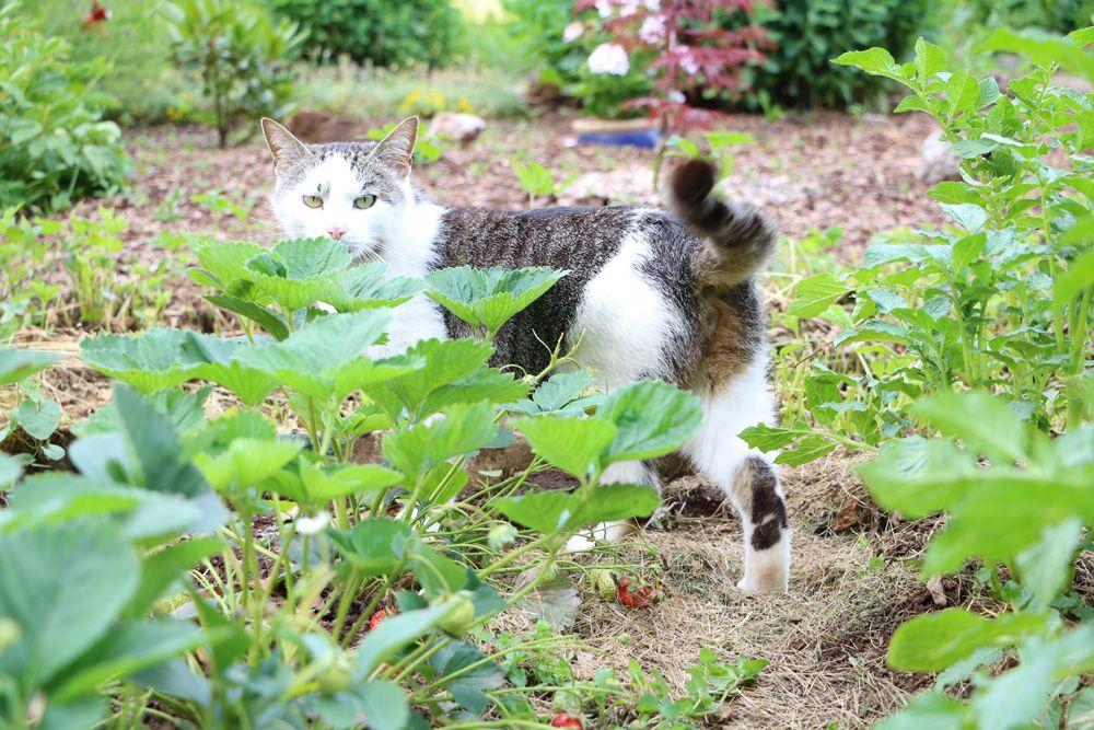Katzen Vertreiben 6 Wirksame Methoden Aus Dem Garten Fernhalten Katzen Garten Und Ratten Vertreiben