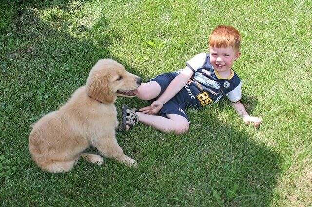 10 Things You Must Expose Your New Puppy To Now Dog Breeds Best Dog Breeds Dogs