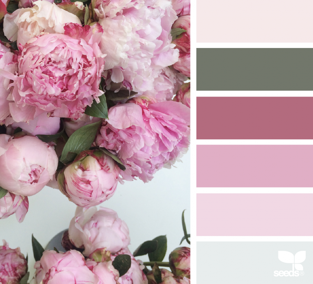 Peony Palette | Color Palettes | Pinterest | Peony, Colour pallete ...